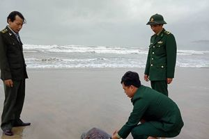Thừa Thiên – Huế: Thả cá thể rùa quý hiếm về môi trường tự nhiên