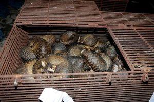 Triệt phá đường dây mua bán động vật quý hiếm số lượng 'khủng' tại Hà Tĩnh