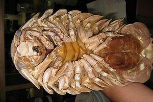 Những đặc sản hiếm có khó tìm 'ăn là ghiền' ở Quy Nhơn