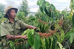 Kon Tum: Hỗ trợ đồng bào làm kinh tế vườn hiệu quả