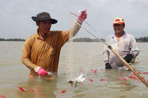 Tuyệt kĩ bắt cá đối của người dân sống quanh cửa sông