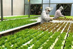 Tăng trưởng GDP ngành nông nghiệp đạt mức cao nhất 7 năm qua