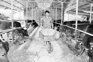 Tháo gỡ vướng mắc trong hỗ trợ doanh nghiệp đầu tư vào nông nghiệp