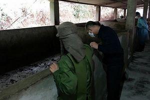 Cảnh báo dịch lở mồm long móng trên lợn bùng phát ở Quảng Ninh