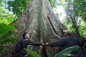 Giai thoại tình yêu trái ngang trong khu rừng nguyên sinh ở Tây Nguyên