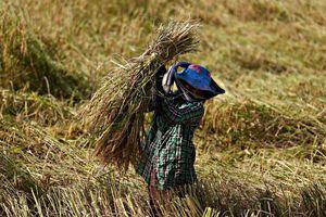 Campuchia chỉ trích EU vì bỏ ưu đãi thuế gạo