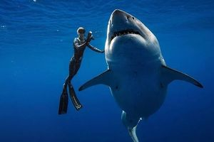 Phát hiện cá mập khổng lồ ngoài khơi Hawaii bơi cùng thợ lặn