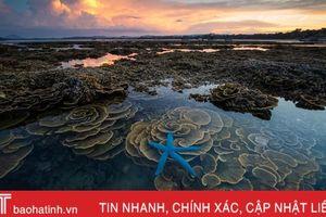 Rạn san hô tuyệt đẹp ở Hòn Yến, Phú Yên nổi bật trên tạp chí du lịch Mỹ