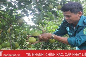 Hương Khê chi gần 23 tỷ đồng hỗ trợ sản xuất nông nghiệp