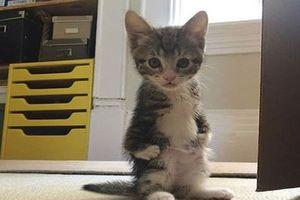 CLIP: Mèo con đứng hai chân khi thấy bồn tắm sủi bọt