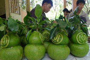 BẢN TIN TÀI CHÍNH - KINH DOANH: Dân buôn xe 'vượt cạn' dịp Tết, tăng giá trị nông sản từ trái cây tạo hình