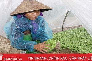 Sản xuất rau mầm - chi phí thấp, thu lãi cao
