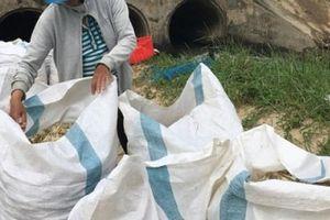 Khánh Hòa: Kiệu Tết mất mùa, nông dân khóc ròng, đối mặt nợ nần