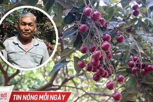 Lão nông từ chối Trung Quốc: Đặc sản độc đáo phải để dân Việt ăn Tết
