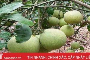 Hà Tĩnh có 72 cây ăn quả đặc sản đầu dòng