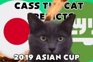 Mèo tiên tri Cass dự đoán bất ngờ về đối thủ của Việt Nam tại vòng Tứ kết