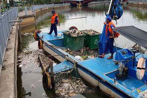 Đề nghị giảm lượng cá trên kênh Nhiêu Lộc - Thị Nghè