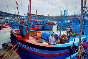Hàng loạt tàu cá Khánh Hòa mở biển 'đánh bắt xuyên tết'