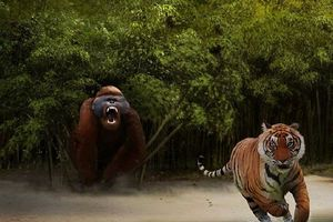 Liệu King Kong đã từng xuất hiện trên Trái Đất?
