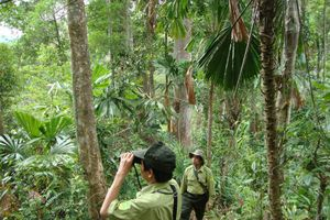Quảng Nam: Ngăn chặn phá rừng trong dịp Tết