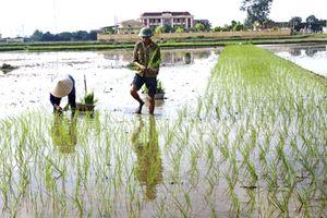 Trên 32% diện tích gieo trồng đã có nước cho vụ Đông Xuân
