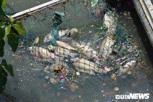 Vì sao cá chết hàng loạt trên kênh Nhiêu Lộc – Thị Nghè?