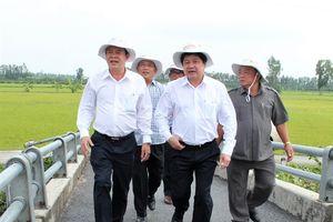 Nhân rộng cánh đồng lớn sản xuất lúa