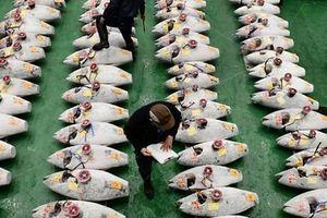 Nhật Bản phá chợ cá nổi tiếng Tsukiji để xây trung tâm hội nghị