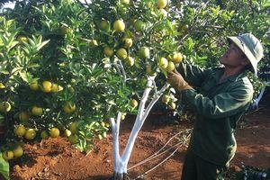 Sơn La biểu dương 955 hộ gia đình, HTX, DN tiêu biểu lĩnh vực nông nghiệp