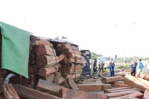 Xe container chở hàng chục khối gỗ đè bẹp ô tô 9 chỗ