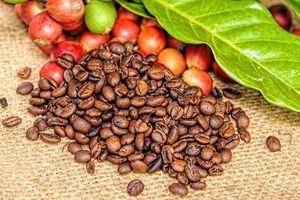 Nông sản 23/1/2019: Cà phê giảm; Ca cao xuống thấp nhất 1 tháng