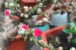 Hà Nội: Trăm hoa khoe sắc trên phố Hoàng Hoa Thám những ngày cận Tết