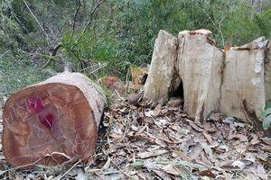 Năm người vào biên giới phá 3.000m2 đất rừng phòng hộ để làm rẫy