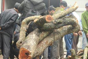 Chặt hạ cây sưa 100 tỷ: Container chứa gỗ sưa được khóa chặt, bảo vệ 24/24h