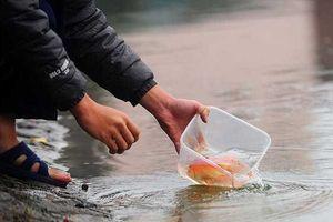 Cách thả cá chép tiễn ông Công ông Táo về trời chuẩn nhất, đúng cách nhất