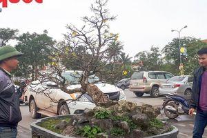 Cây mai 'bạt phong hồi đầu' giá 5 tỷ gây sốt tại Hội hoa Xuân Quảng Bình