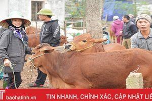 Đi chợ trâu bò độc nhất Hà Tĩnh