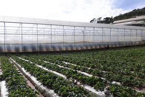 Công nghệ cao 'tạo đà' để nông nghiệp Việt Nam 'cất cánh'