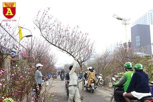 Chợ hoa Nhật Tân tấp nập những ngày cuối năm