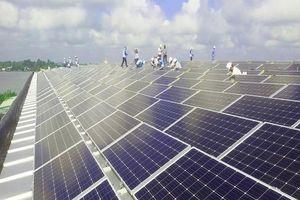 Dự án điện mặt trời của Sao Mai Group gấp rút thi công