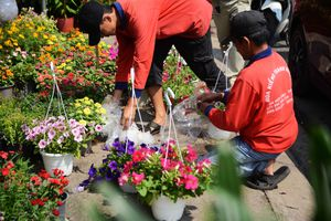 Hoa Tết rực rỡ trên các ngả đường, người Sài Gòn thấy Xuân cận kề