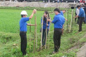 Đà Nẵng: Phát động 'Tết trồng cây đời đời nhớ ơn Bác Hồ' nhân dịp xuân Kỷ Hợi