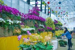 Hàng vạn gốc lan trưng bày tại lễ hội hoa Bái Đính