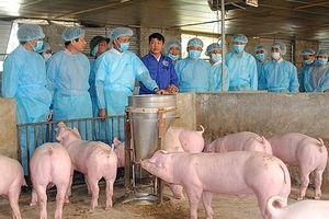 Phòng ngừa, ngăn chặn nguy cơ xâm nhiễm và ứng phó khẩn cấp với dịch tả lợn châu Phi