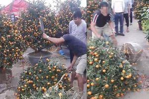 Chiều 29 Tết, người dân tự tay chặt phá đào, quất vì bị ép giá quá rẻ
