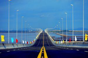 Cây cầu kết nối bờ xuân