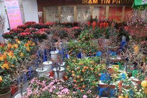 Chợ Tết lâu đời nhất Hà Nội bán những gì?