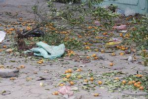 Xót xa đào, quất bị người bán phá bỏ tơi tả trên phố Hà Nội ngày 30 Tết