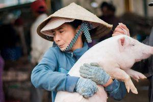 Tới Quảng Nam xem chị em bồng heo, nựng heo ở chợ Bà Rén