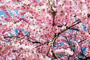 Cảm giác đợi mùa xuân